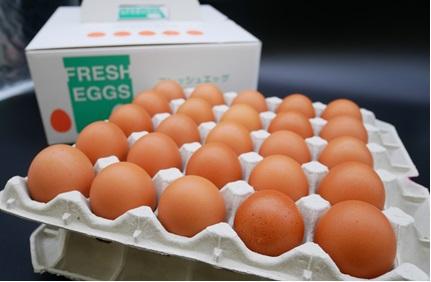 滋養卵(50個入り)