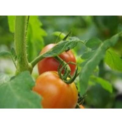 JA産「フルーツトマト入り季節の野菜セット」