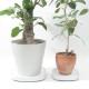 tidy 植木鉢トレー Plantable REGULAR/LARGE, BLACK/BROWN/WHITE