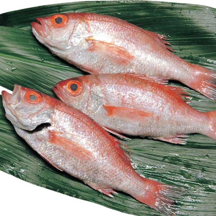 のどぐろ寿司(6切入り×3本セット) 日本海のルビーとも言われる高級魚、のどぐろを使ったお寿司です! 日本ギフト大賞島根賞を受賞させていただきました!