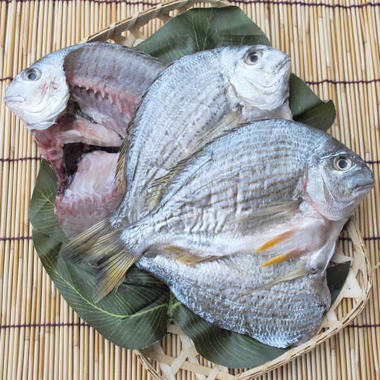 【国産】ヘダイ干物 1枚--燻し銀色の鯛!