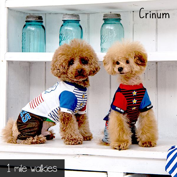 Crinum(クリナム)Stitching T-shirt
