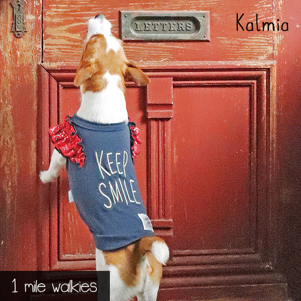 Kalmia(カルミア)Bandana pattern frills T-shirt