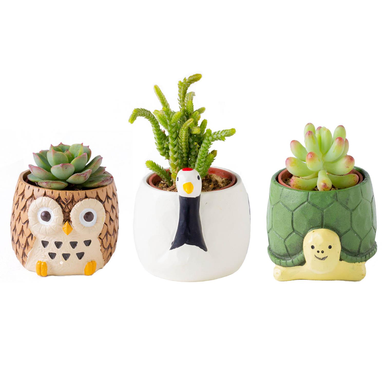 花のギフト社 多肉 アニマル 開運 新生活 陶器鉢 動物 インテリア 観葉植物 ギフト プレゼント
