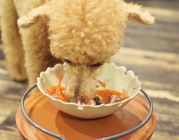 ★季節限定・数量限定★春野菜とぶりツナのしりしりサラダ【冷凍】