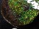 アンモライト ドラゴンスキン セクションピース(片面) AAA(スーパージェムグレード)