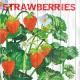 【イチゴ】ドイツ製 PPD ペーパーナプキン/Harvest Strawberries【Lサイズ 20枚入り】