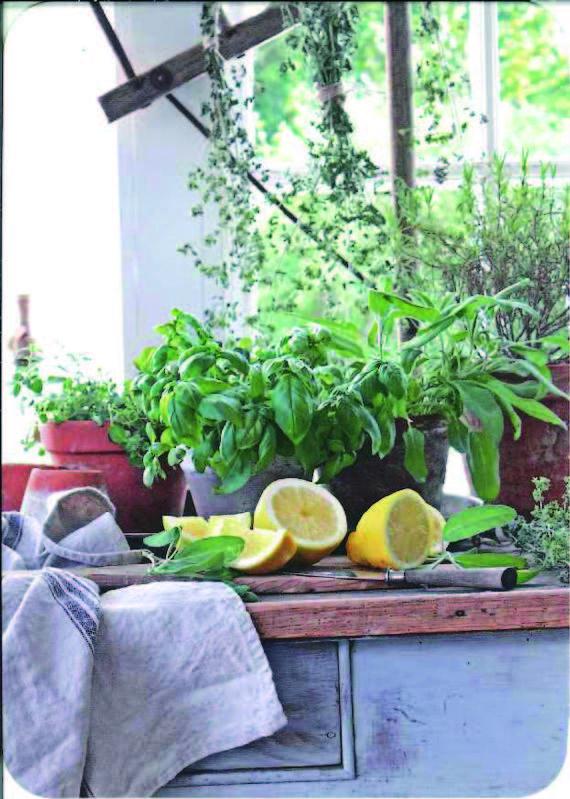 【花柄・輸入ポストカード】ドイツ Gollong(ゴロン)定型サイズ  カットレモンとハーブ