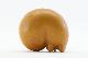 Lisa Larson リサ ラーソン SKANSEN 動物園 Rav キツネ/TA9368