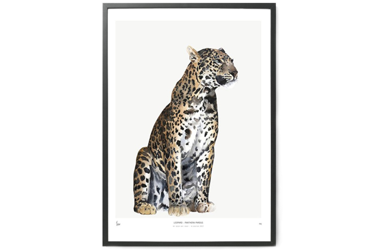MY DEER ART SHOP ポスター/アートプリント 50×70cm INTO THE WILD / Leopard