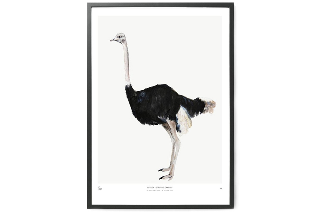 MY DEER ART SHOP ポスター/アートプリント 50×70cm INTO THE WILD / Ostrich