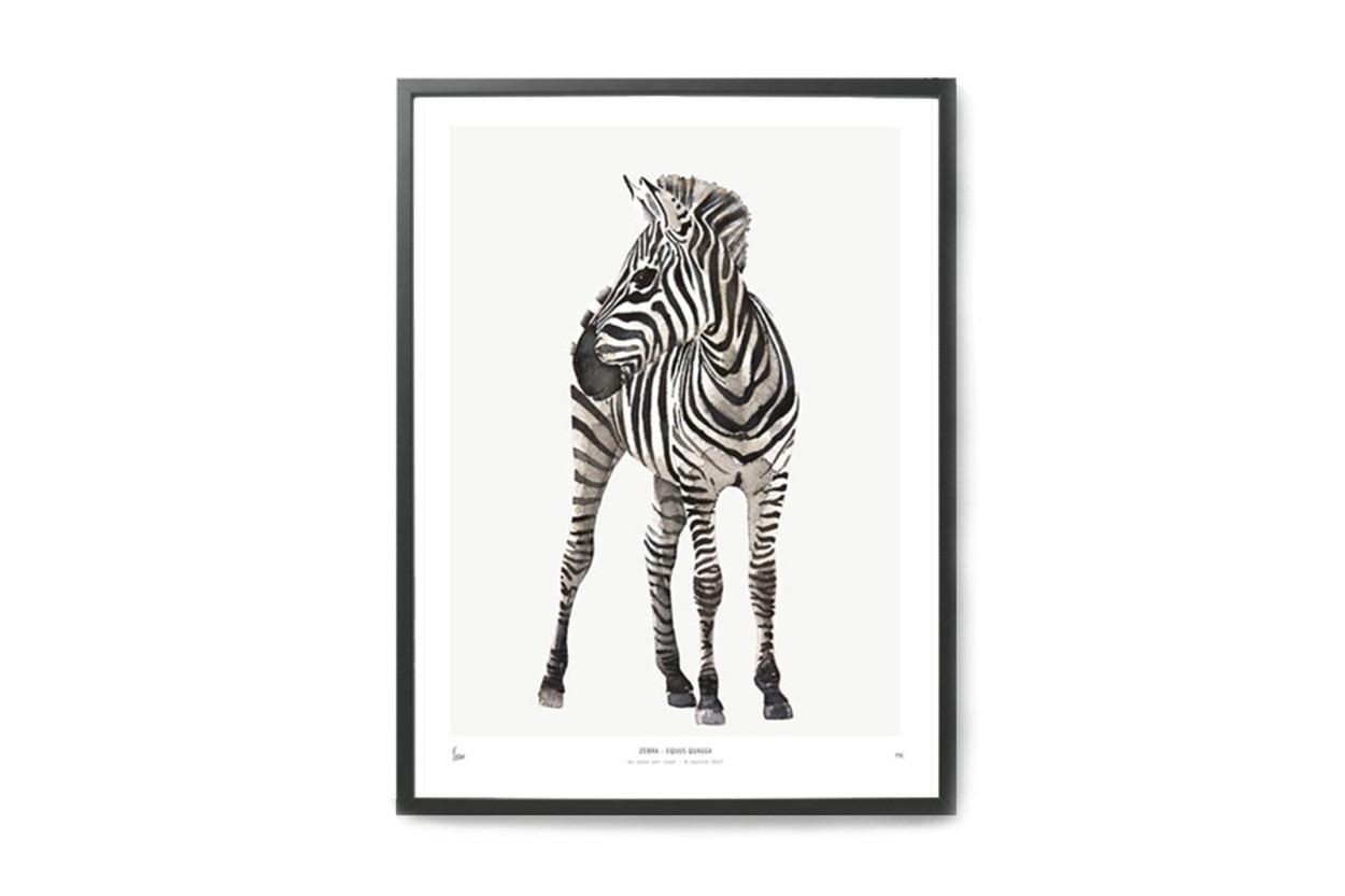 MY DEER ART SHOP ポスター/アートプリント 30×40cm INTO THE WILD / Zebra