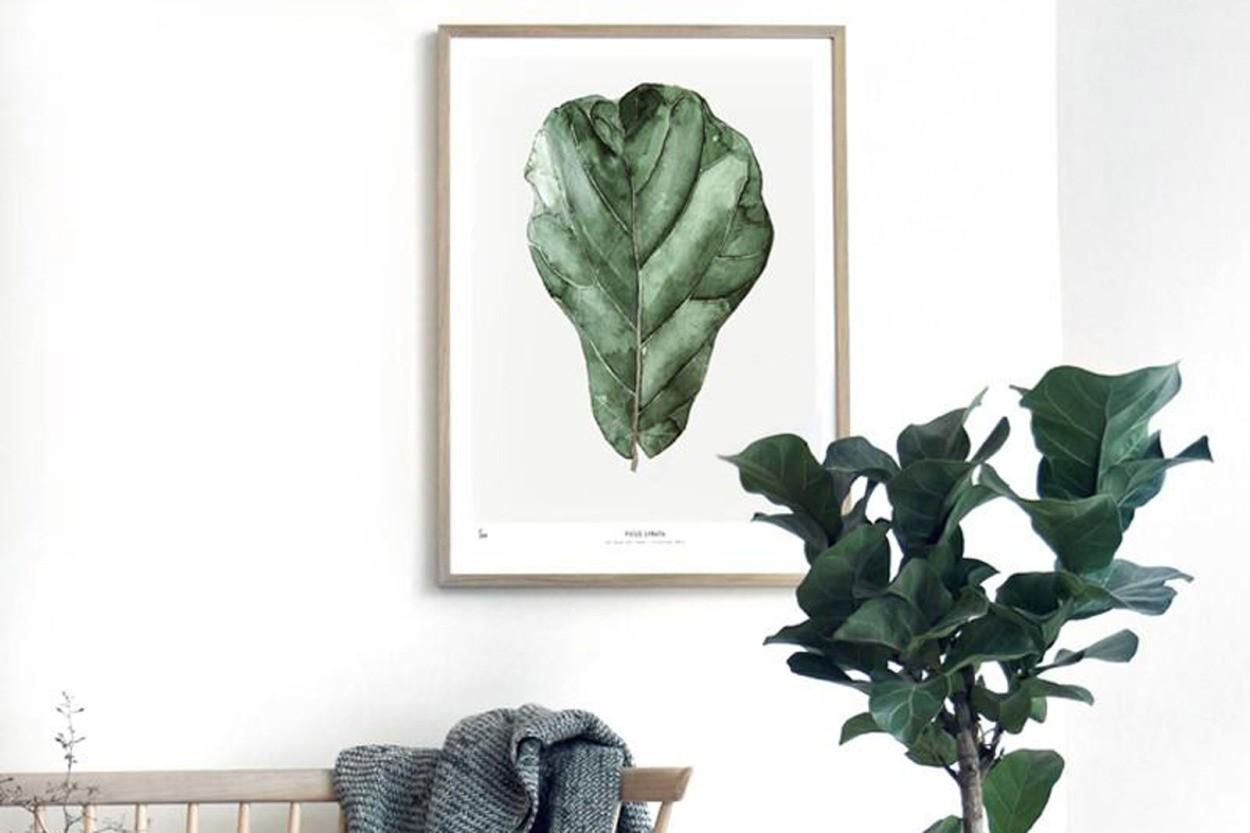 MY DEER ART SHOP ポスター/アートプリント 50×70cm BOTANICS / Ficus Lyrata