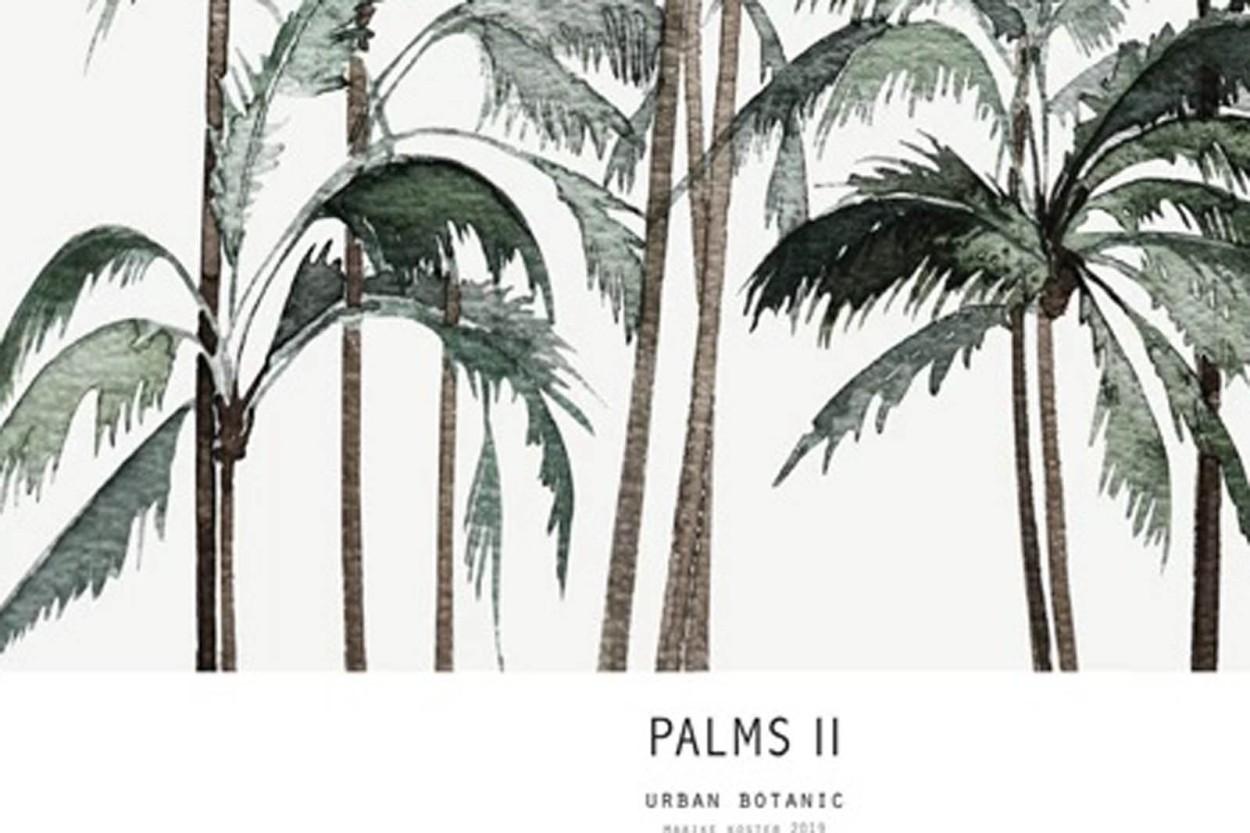MY DEER ART SHOP ポスター/アートプリント 30×40cm Botanics / Palms II (Limited edition #250)