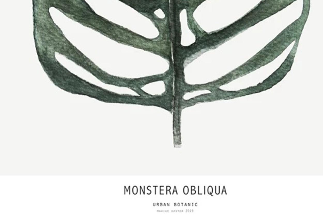 MY DEER ART SHOP ポスター/アートプリント 30×40cm Botanics / Monstera Obliqua (Limited edition #250)
