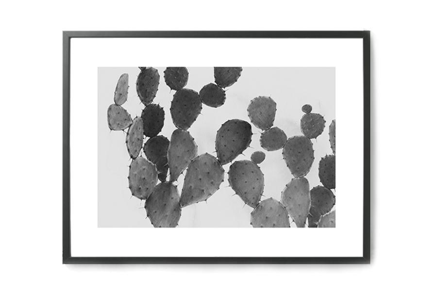 Magdalena Tyboni Design ポスター/アートプリント 30 x 40 cm CACTUS