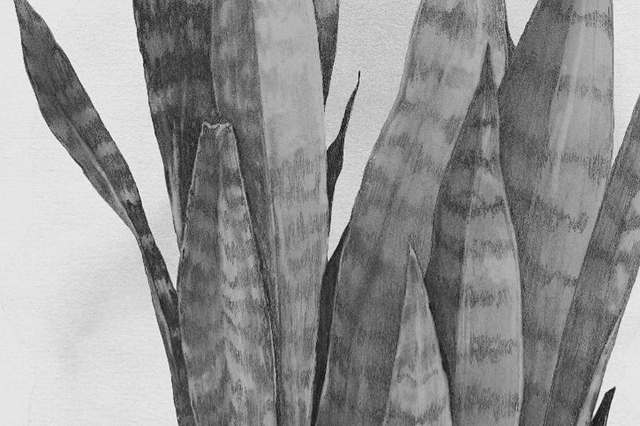 Magdalena Tyboni Design ポスター/アートプリント 30 x 40 cm PLANT