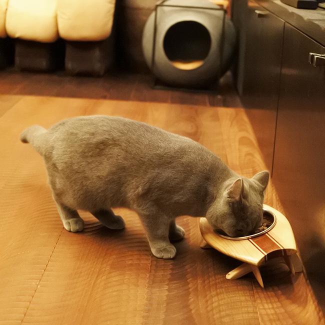 【ORIGINAL】FOOD STAND #007 /ペット用フードスタンド スキムボードデザイン(made in Japan)受注生産