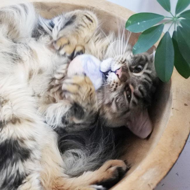 【ハンドメイド / 天然アルパカウール】猫用おもちゃ / Marbled Felt Cat Toy - House of cat Canada