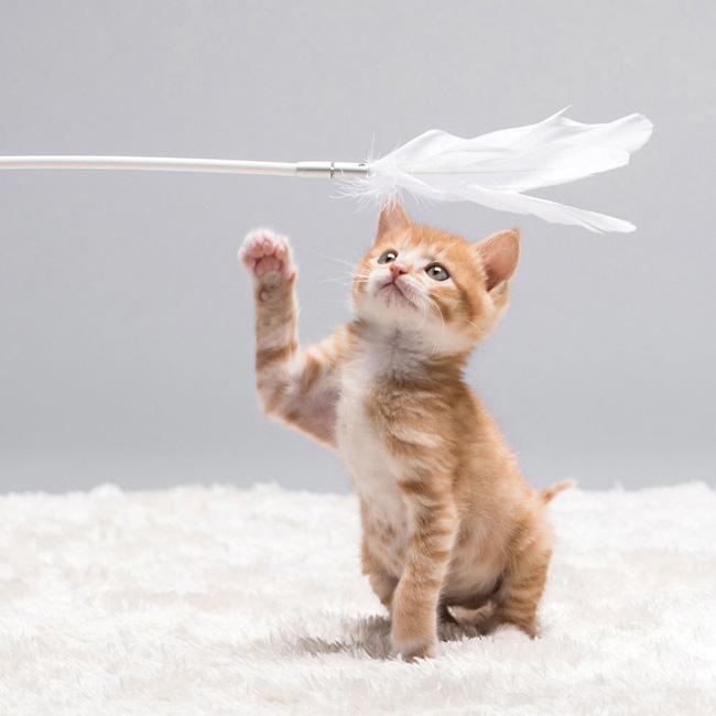 Pidan - Cat Teaser Wand Shake-Shake/吸盤付き羽猫じゃらし