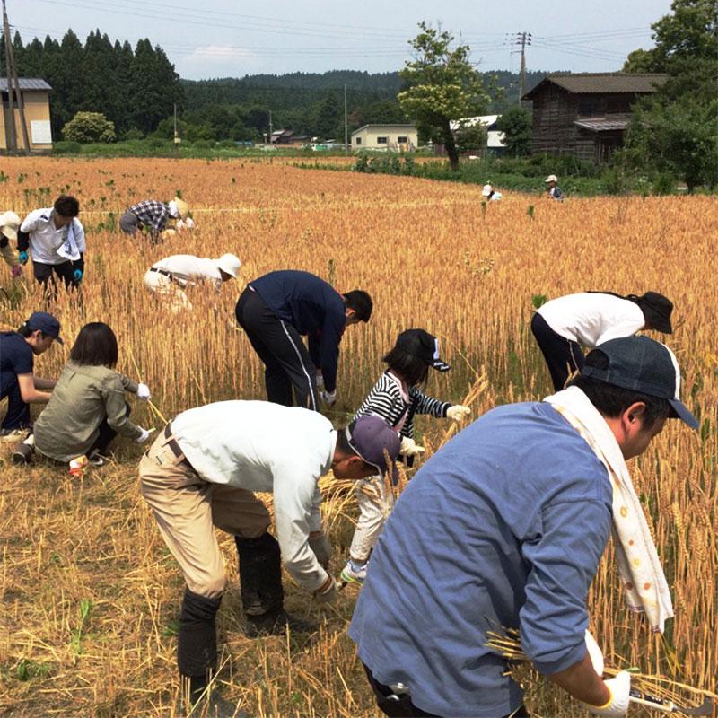 新潟県産生(き)醤油 郷土の実り2019年仕込み 1L