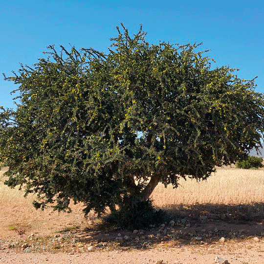 PRIMAVERA アルガンbio 30ml