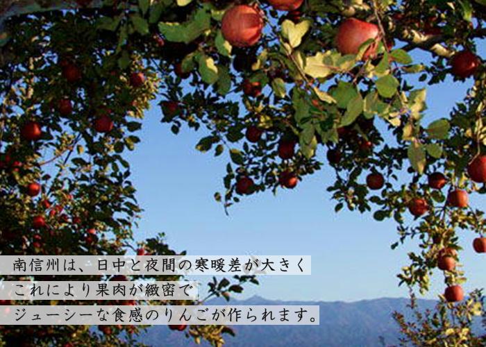 りんご サンふじ【家庭用】 約5kg(12~16玉) S331