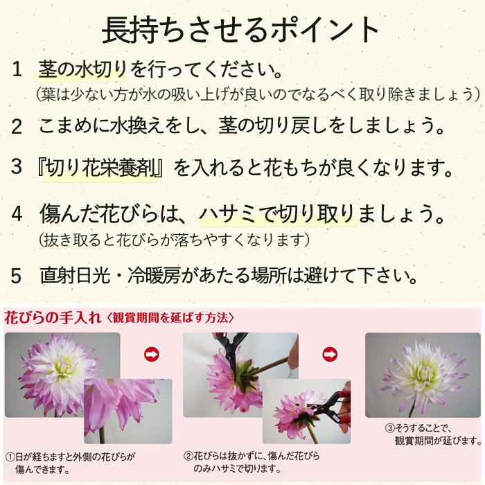 S715 ダリアミックス花束 月1定期便(3月~6月)