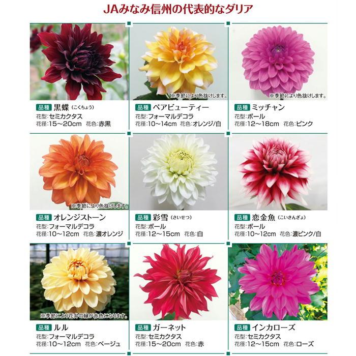 S715 【母の日 ギフト 2021】ダリアミックス花束 月1定期便(3月~6月)