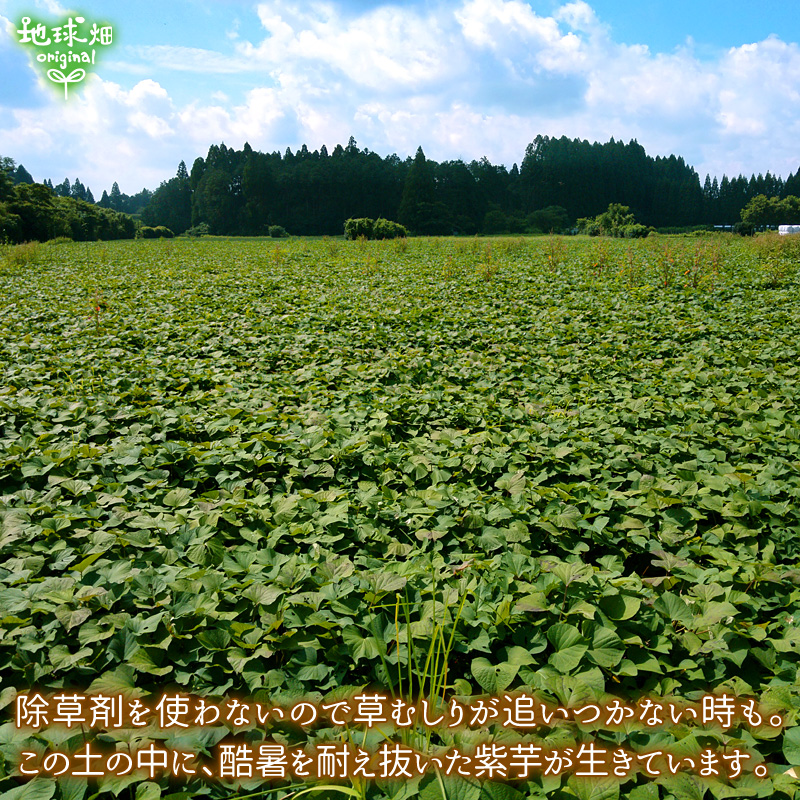 久保田さんの紫芋 ML (1本100〜500g)