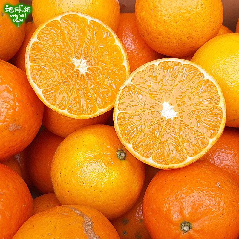 柑橘セット 計12kg