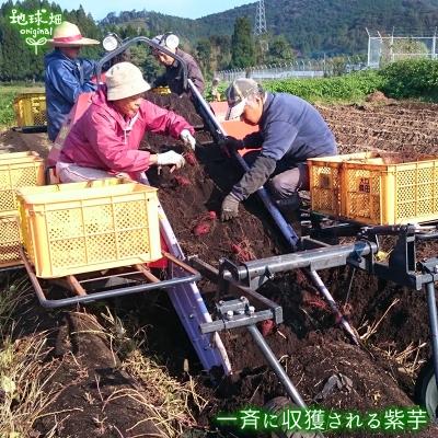 紫芋 S (1本50〜100g)