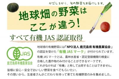 【12/1〜12/8】有機野菜セット 7品目+3