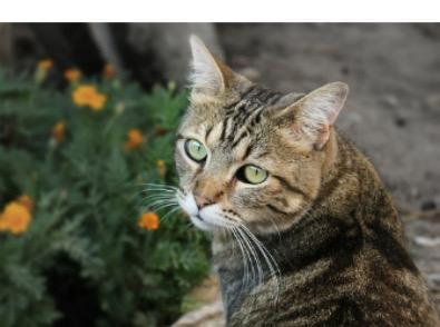 ネコ・ネズミなぜ逃げる? 6個セット屋内用 天然素材食品添加物100% 野良猫・ネズミ撃退 忌避グッズ