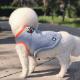 【国内配送】犬用 クーリングベスト XS オレンジ 熱中症予防 散歩 涼しい