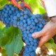 【2020年新商品】>M.ヴェルデジャーノ・ティント 3L BOXワイン>Marques de Verdellano Tinto
