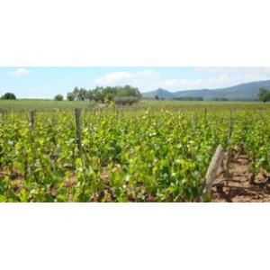 ロベジャ・グラン・レセルバ>Rovellats Gran Reserva