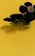 Flower Motif Stud Pierce