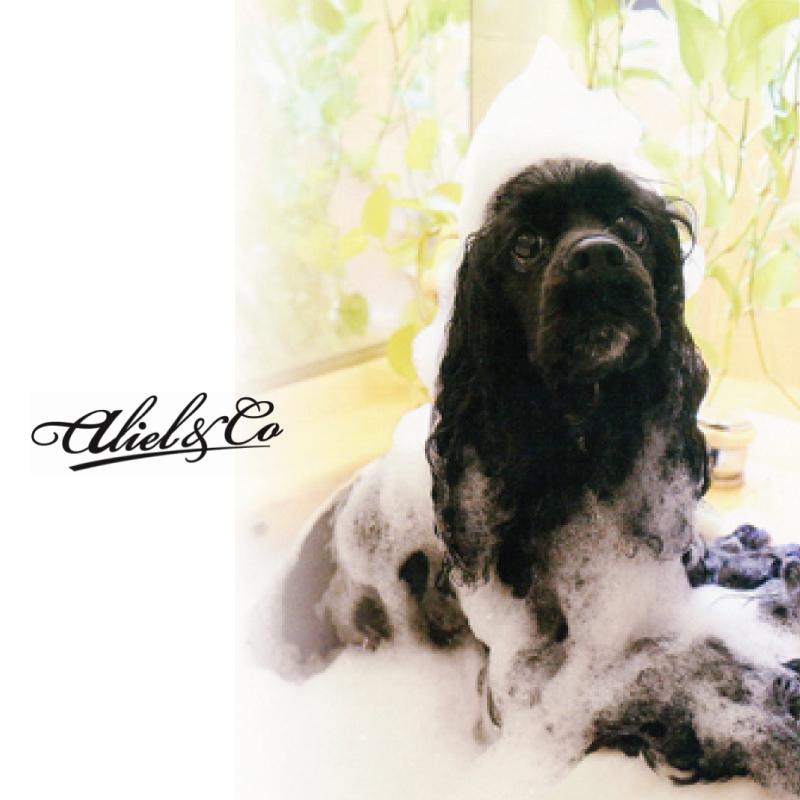 アリールアンドシー ナチュラルエイジングケア ノンシリコンシャンプーS11/3800ml (全犬種・全猫種対応)