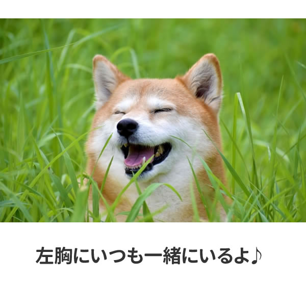 柴犬 tシャツ ワンポイント 柴犬グッズ おもしろ グッズ 雑貨 犬 オリジナル 犬柄 メンズ レディース プリント 服 カラー 可愛い おしゃれ 面白い 柴犬柄 ギフト