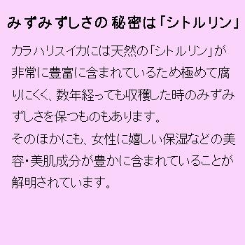 ポーラカラハリ フェイスマスク【入数400枚】