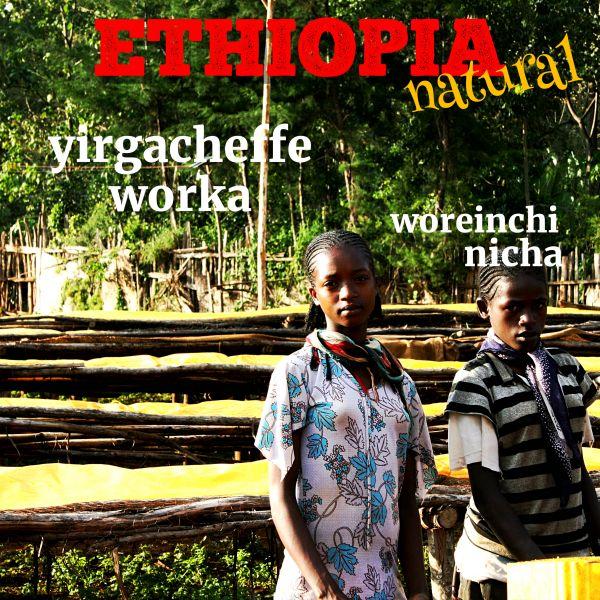 ETHIOPIA-Yirgacheffe Worka Woreinchinicha/エチオピア イルガチェフェ ウォルカ ウレインチニーチャ(ナチュラル)