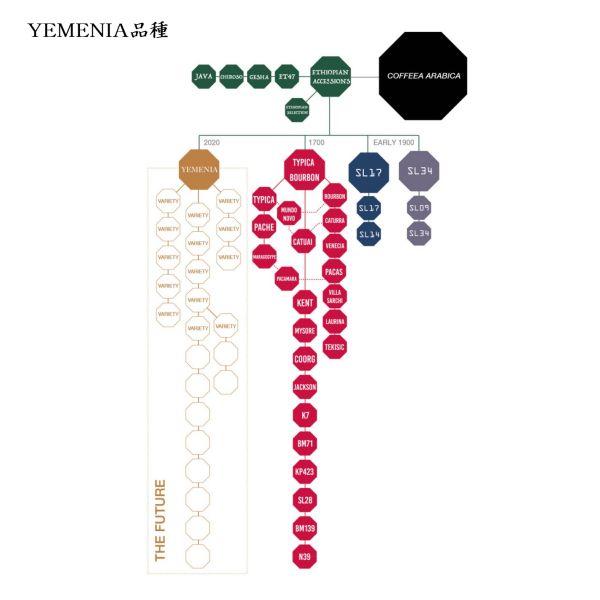 YEMEN-BaniNahimi_yemenia / イエメン バニ・ナヒミ イエメニア種