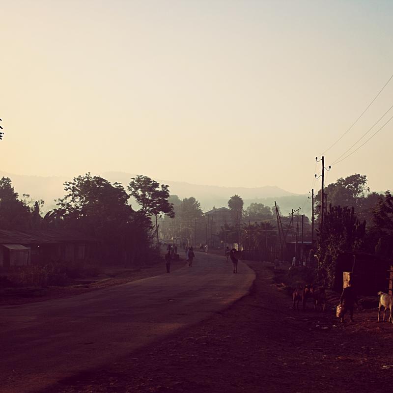ETHIOPIA-Yirgacheffe Worka Woreinchinicha/エチオピア イルガチェフェ ウォルカ ウレインチニーチャ集落(ウォッシュト)