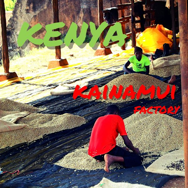 KENYA-kainamui/ケニア カイナムイ