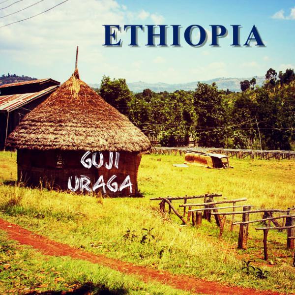 ETHIOPIA-Guji Uraga/エチオピア グジ ウラガ(ウォッシュト)
