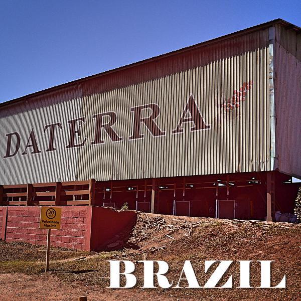 BRAZIL-Daterra/ブラジル ダテーラ農園
