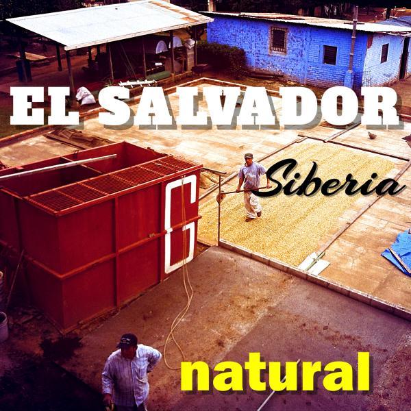 EL SALVADOR-Siberia/エルサルバドル シベリア農園(ナチュラル)