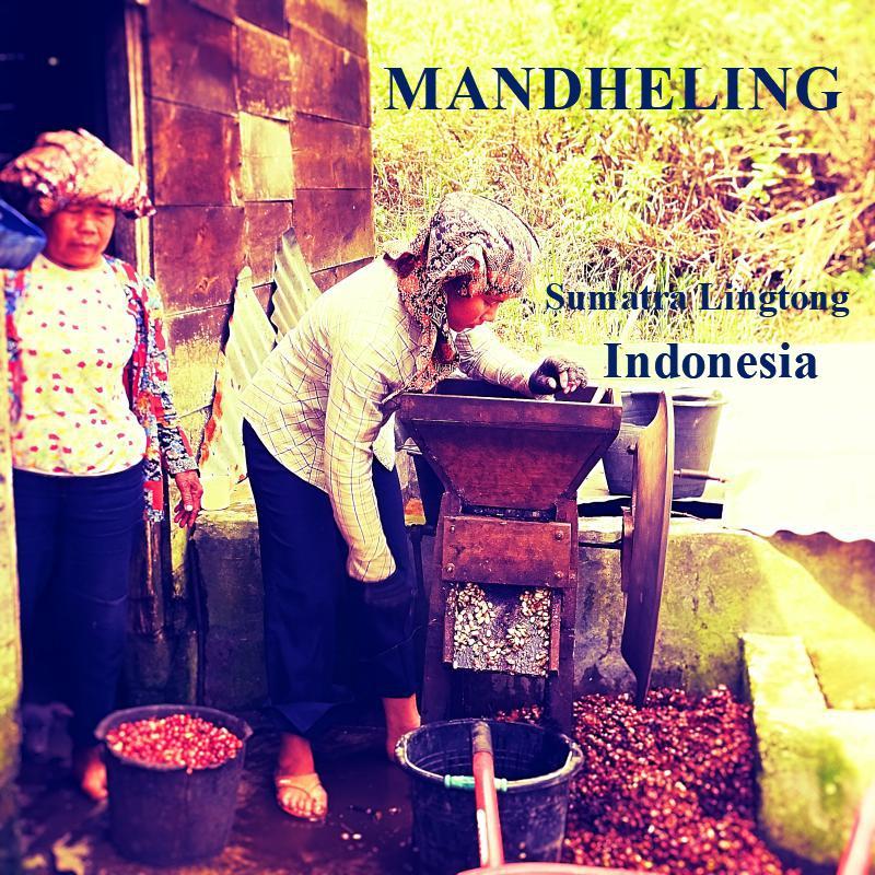 MANDHELING-Sumatra Lington/マンデリン リントン地区