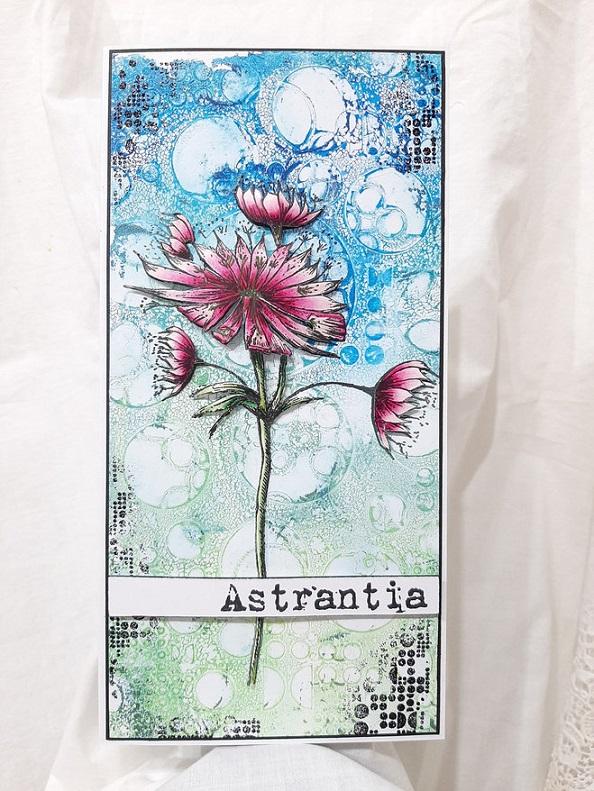 AALL & Create Stamp A5 - #452